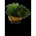 Decoração para aquário - Búzio com planta